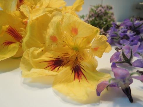 Kapuzinerkresseblüten